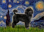 STARRY NIGHT<br> & Portuguese Water Dog