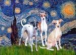 STARRY NIGHT<br> 3 Italian Greyhounds