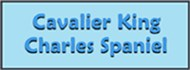 CAVALIER KING<br>CHARLES SPANIEL