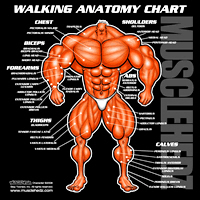 The Walking ANATOMY Chart