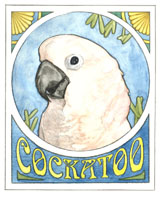 For Moluccan Cockatoo Lovers!