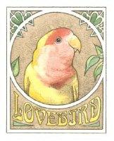 For Lovebird Lovers!