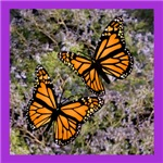 Monarch Love