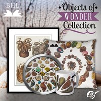 Objects Of Wonder Collection