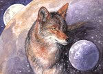 Coyote Moon Shirts & Jackets