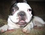 Louie Happy