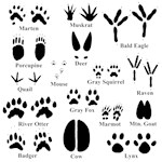 Animal Tracks Collection 1