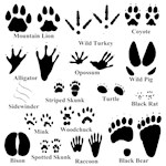 Animal Tracks Collection 2