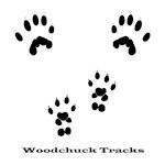 Woodchuck Tracks