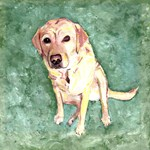 Southern Yellow Lab