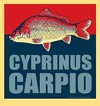 Cyprinus Carpio (Common Carp)