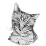 CAT- Black White Tabby