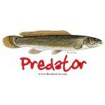 Bowfin - predator