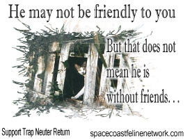 Feral Friend