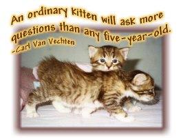 Ordinary Kitten