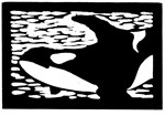 Orca #1