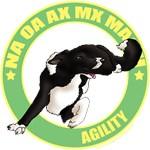 Agility Border Collie