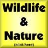WILDLIFE & NATURE DESIGNS