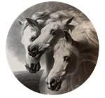 The Pharaoh's Horses