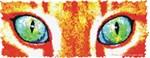 Orange Cat Eyes