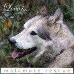 Love is Malamute Rescue