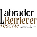 Labrador Retriever Rescue