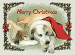 Great Pyrenees Merry Christmas