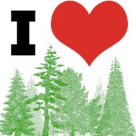 I Heart Pine Trees / Forest / Nature
