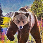 Grizzly Bear Territory