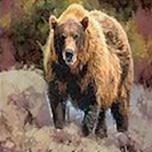 Camo Grizzly Bear