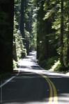 p0256. avenue of the giantz..