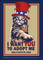 Uncle Sam Cat