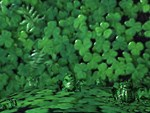 Cool Frogs and Shamrocks