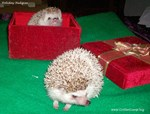 Holiday Critters