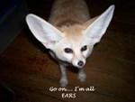 Foxes & Kinkajous