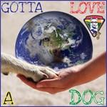 Gotta LOVE A Dog