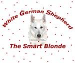 White German Shepherd - Smart Blonde