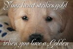 Your heart strikes gold