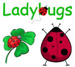 Ladybugs....Ladybugs