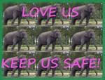 Elephants say Love Us Keep Us Safe