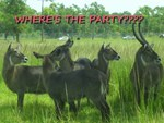 Where's the Party