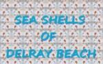 Sea Shells of Delray Beach