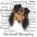 Sheltie Traits