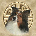Celtic Sheltie