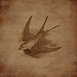 Vintage Swallow Bird
