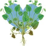Blue Heart, Green Leaves T-shirts