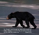 Black Bear - Walk through the Shadow of Death