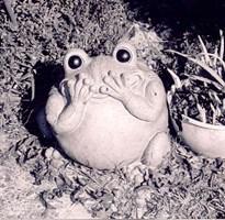 Smiling Frog in the Garden