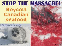Stop the massacre!