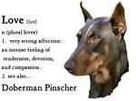 Doberman Pinscher Love Is